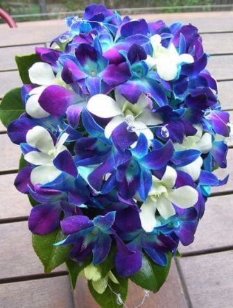 This Orchid Has 2 Of My Wedding Colors Blue And Pink