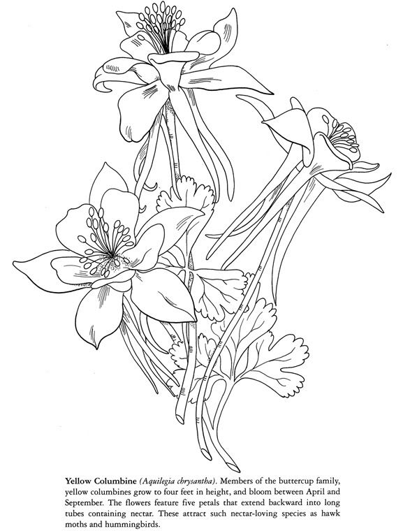 Pin On Floral Coloring Pages For Adults