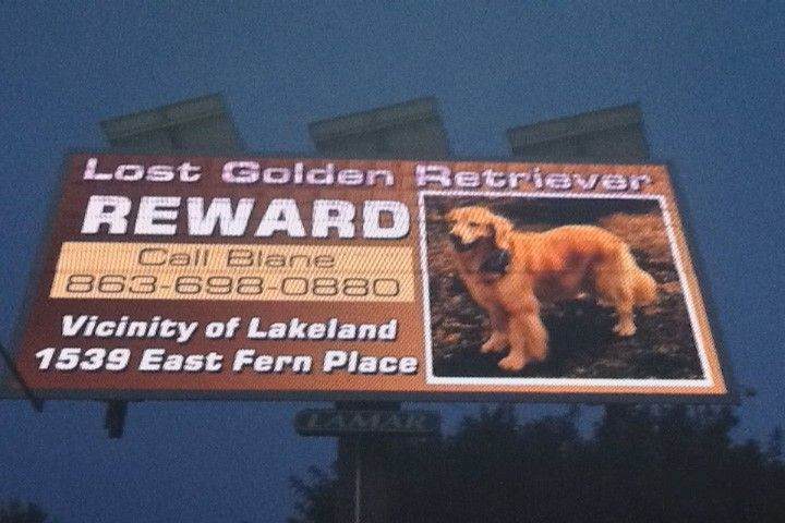 Owner Goes Through Extreme Measures To Find Missing Dog Dogs Golden Retriever Owner Losing A Dog