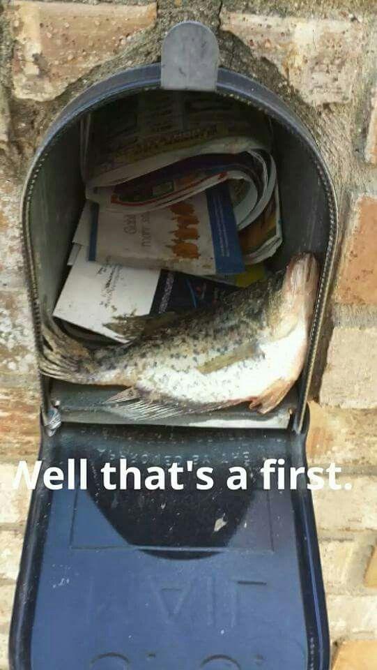 Ew Lol Mail Carrier Humor Usps Humor Going Postal