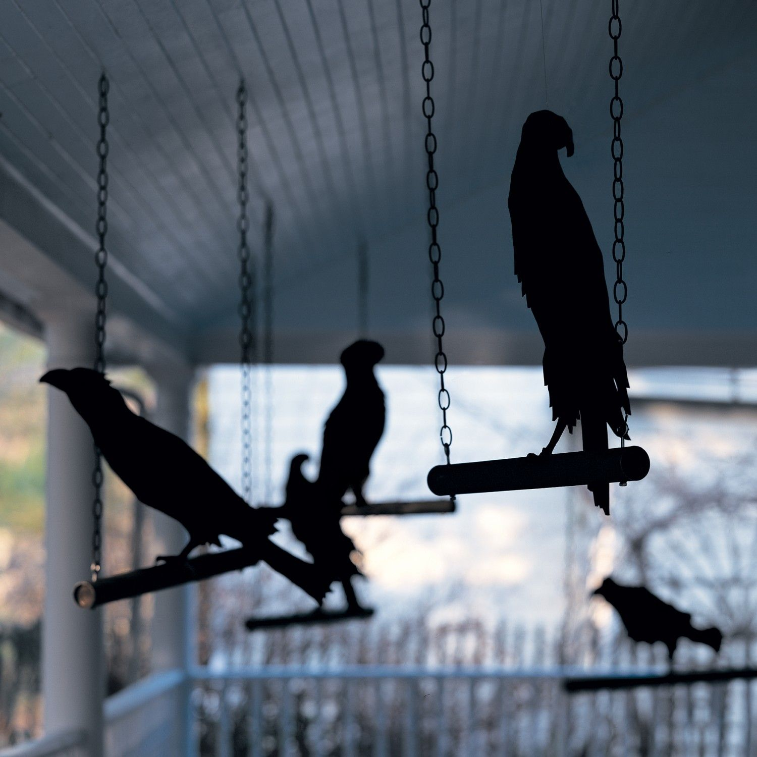Ravens-in-Waiting | Cats, A witch and Halloween