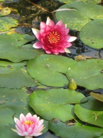 Lovely flowers of Hangzhou.
