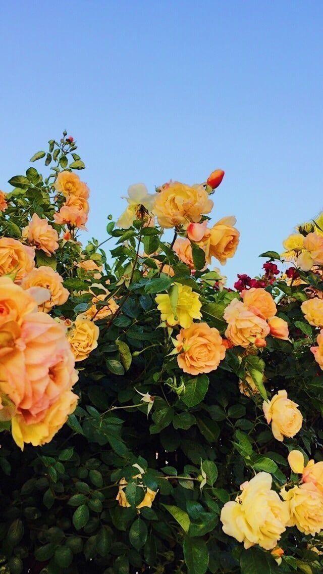 flower aesthetic plants