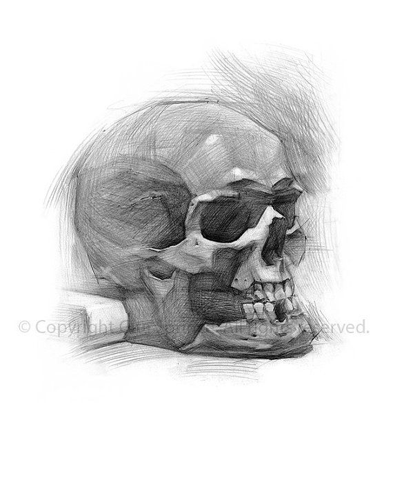 Skull decor skull art print skull drawing by gitasdrawings