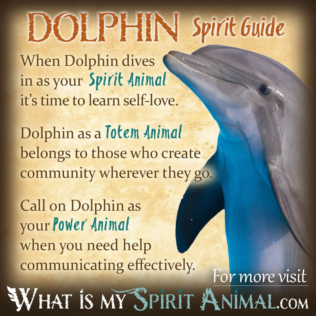 Dolphin Spirit Totem Power Animal Symbolism Meaning 1200x1200