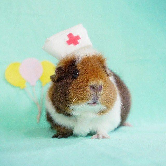 Pin On Piggy Life