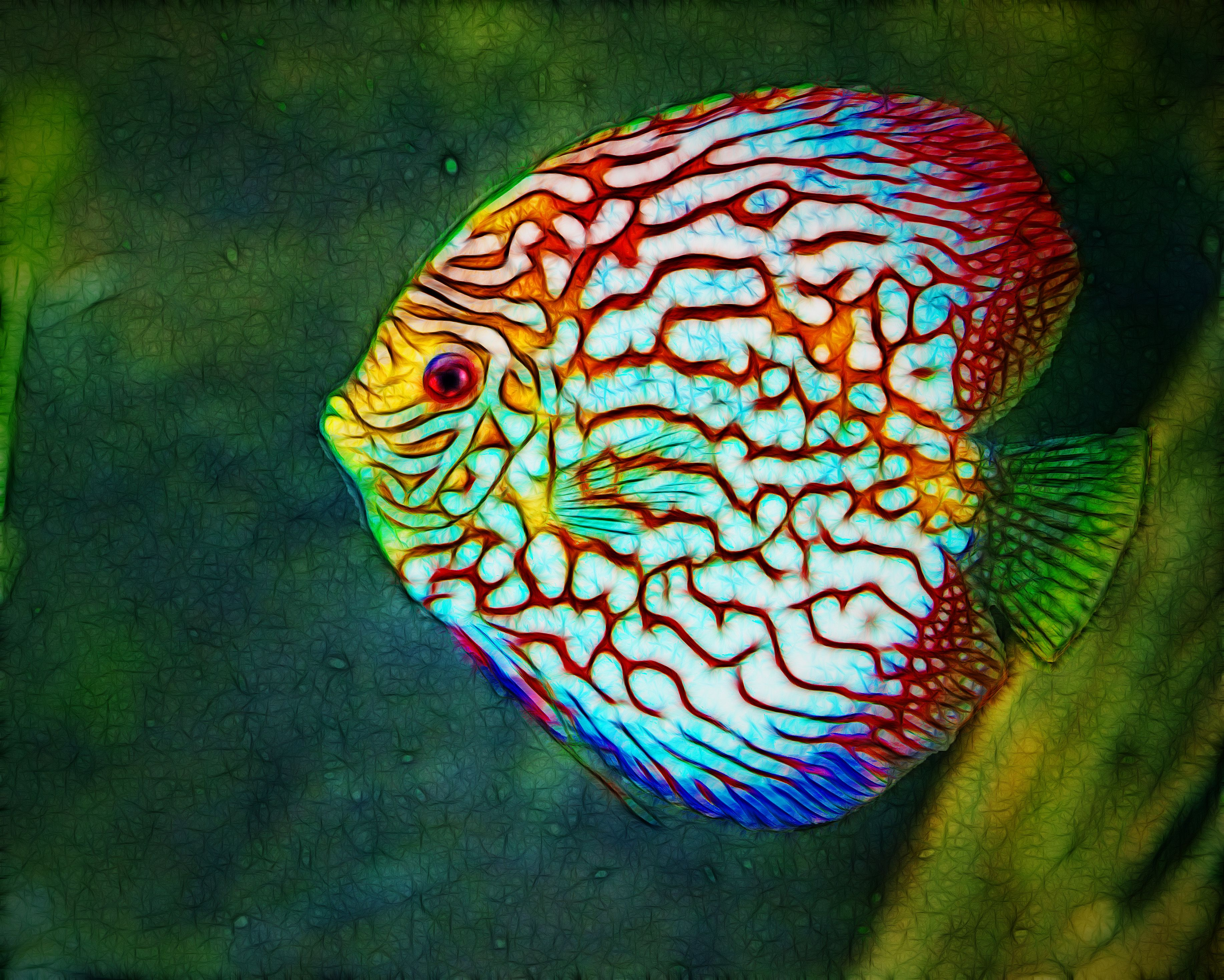Very colorful freshwater aquarium fish - Discus Very Beautiful