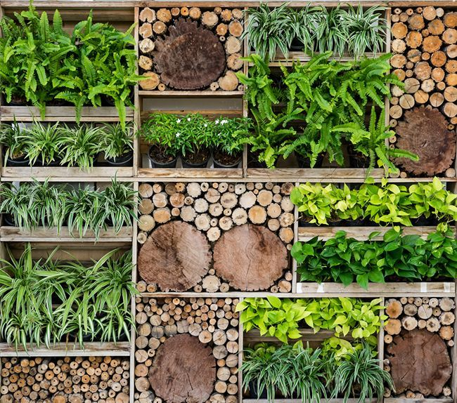 jardines verticales cuatro consejos consejos verdecora