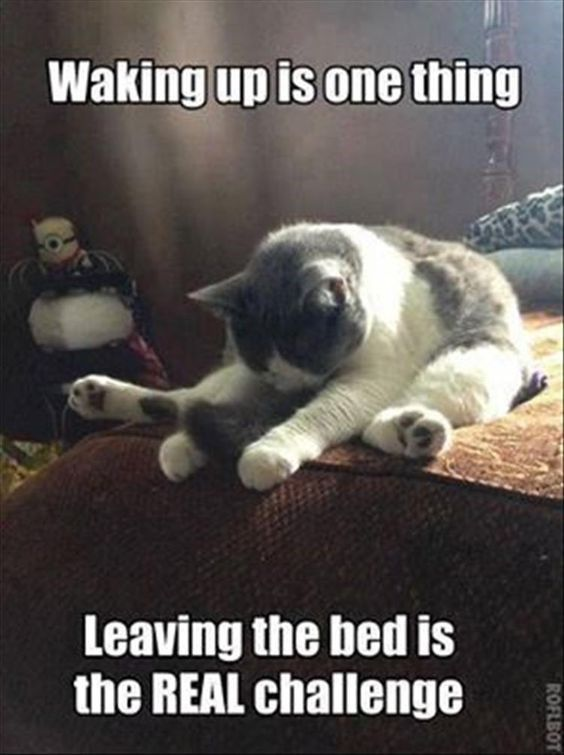 15 Cats And Dogs Who Are Not Exactly a Morning Person (Memes)