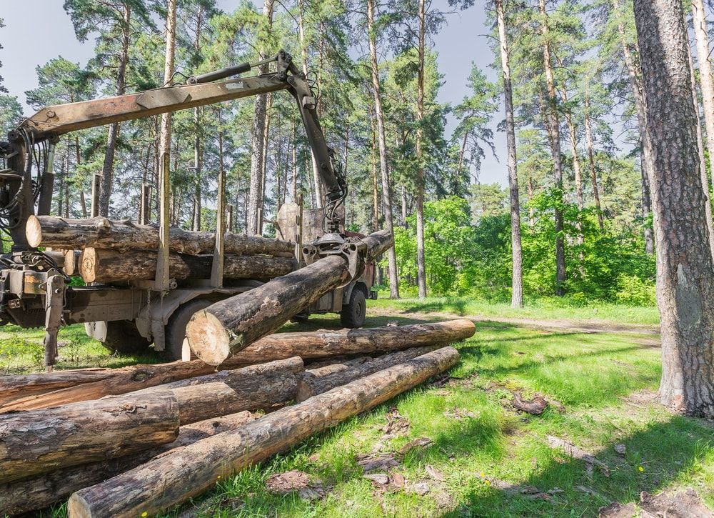 Logging operation timber wood timber logs