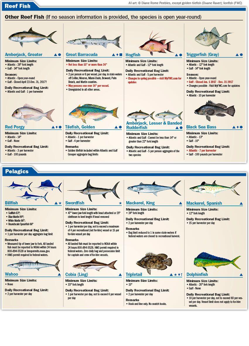 Florida Saltwater Fishing Species Limits Florida Saltwater Fishing Regulations Guide 2017 Eregul Saltwater Fishing Salt Water Fishing Bass Fishing Tips