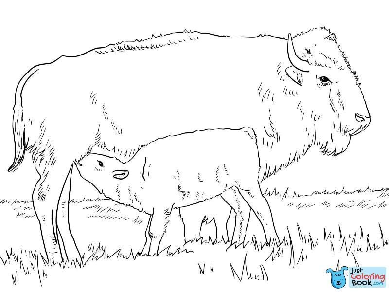 American Bison With Calve Coloring Page Baby Coloring Pages
