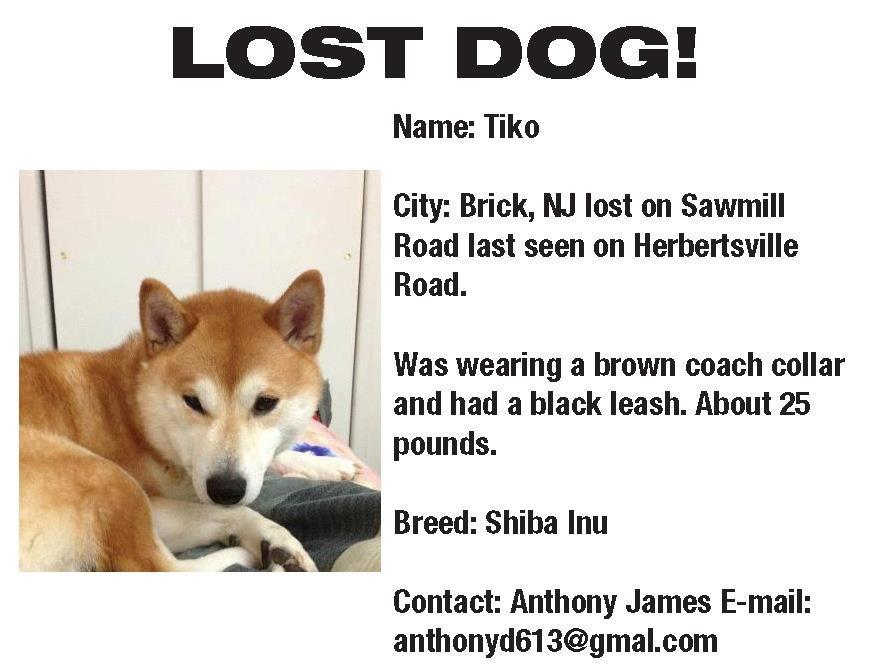LOST DOG Brick, NJ Hurricane Sandy LostPets