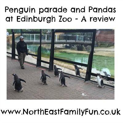 The Penguin Parade Pandas And Dinosaur Fun At Edinburgh Zoo Edinburgh Zoo Zoo The Good Dinosaur