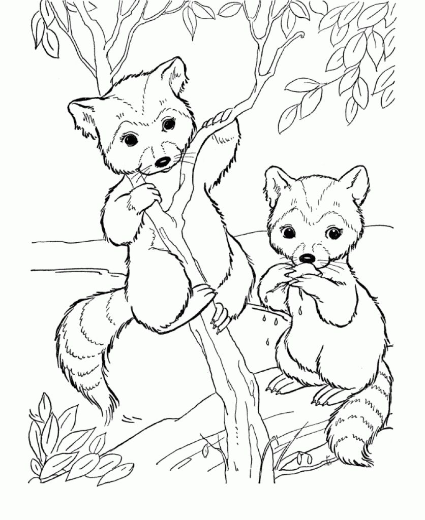 free cute raccoon cartoon animal coloring pages printable - Coloring Pages Cartoon Animals