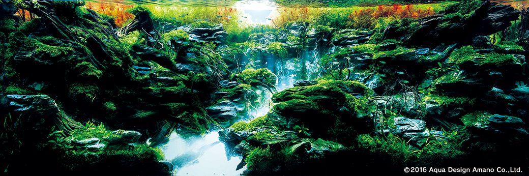 Iaplc 2016 Aquascaping Contest Top 27 Photos Comments Aquascape Art The Green Machine Aquascape Nature Aquarium Aquatic Plants