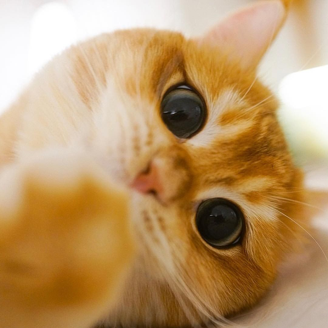 раннего утра картинки котика с большими глазами этого можно использовать