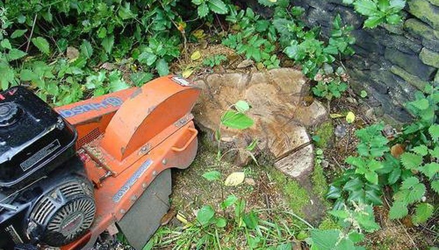 Grind a Stump (With images) Tree root removal