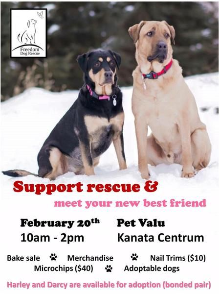 Events Fundraisers Dog Adoption Rescue Dogs Pets