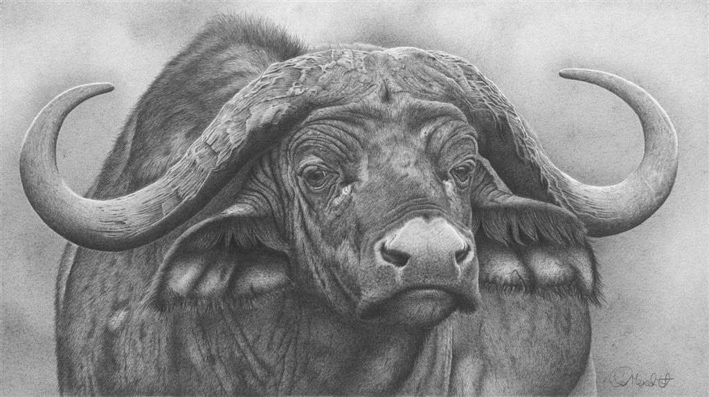 Update on marwell exhibition and art market Wildlife art