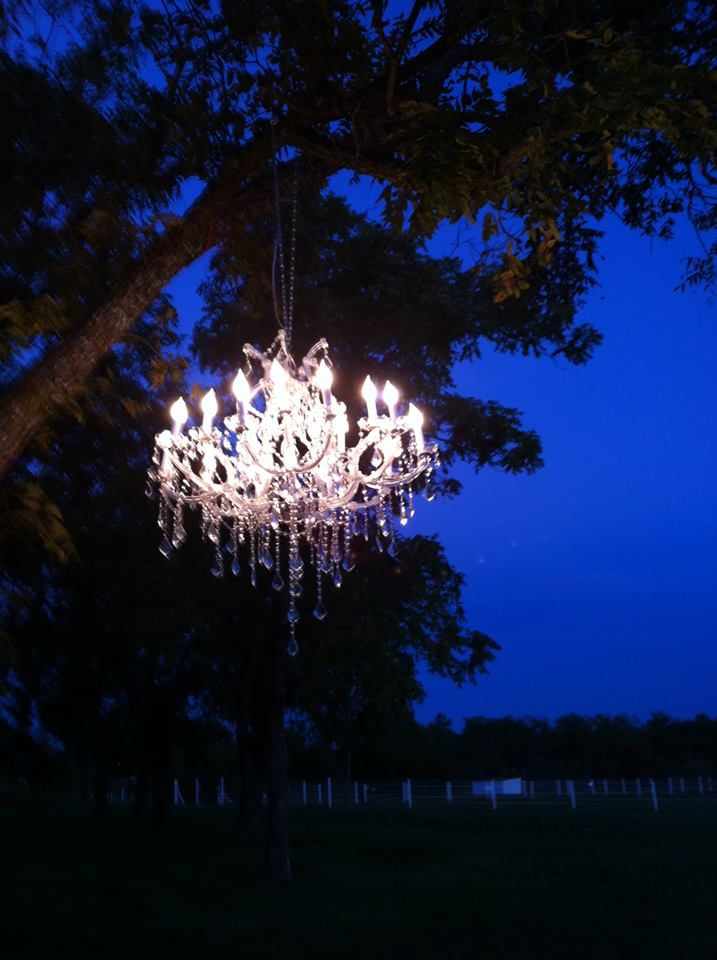 Chandeliers in the trees by http://www.danmeiners.com/