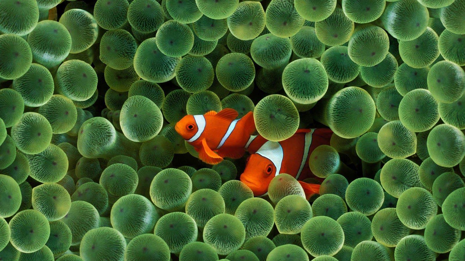 Beautiful Sea Sea Fish Beauti