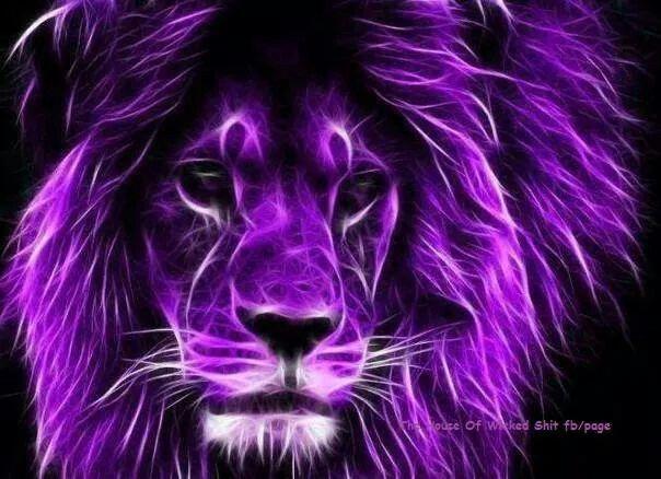 Just Because A Purple Lion Lion Wallpaper Lions