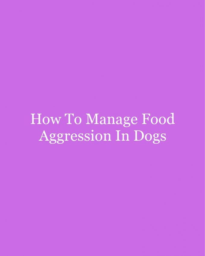 How To Manage Food Aggression In Dogs   Food aggression in ...