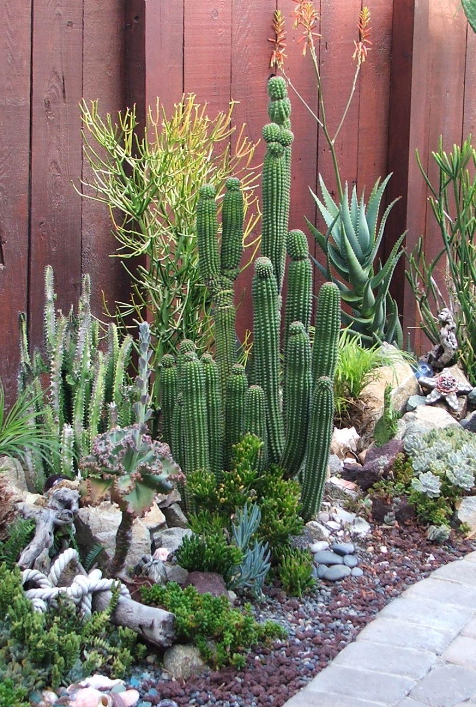 Fabulous Cactus Garden Landscape Idea For Side Home Garden : 12 ...