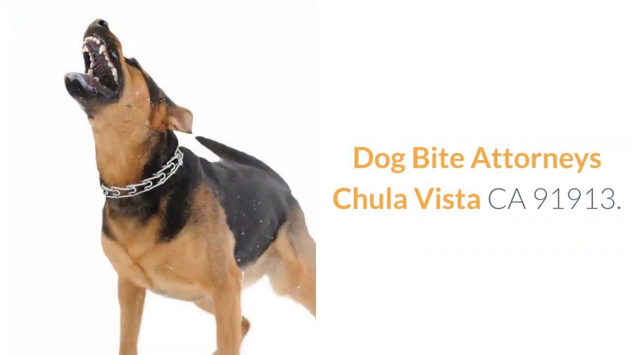 Dog Bite Attorneys Chula Vista 91913 Dog Biting Dogs Attorneys
