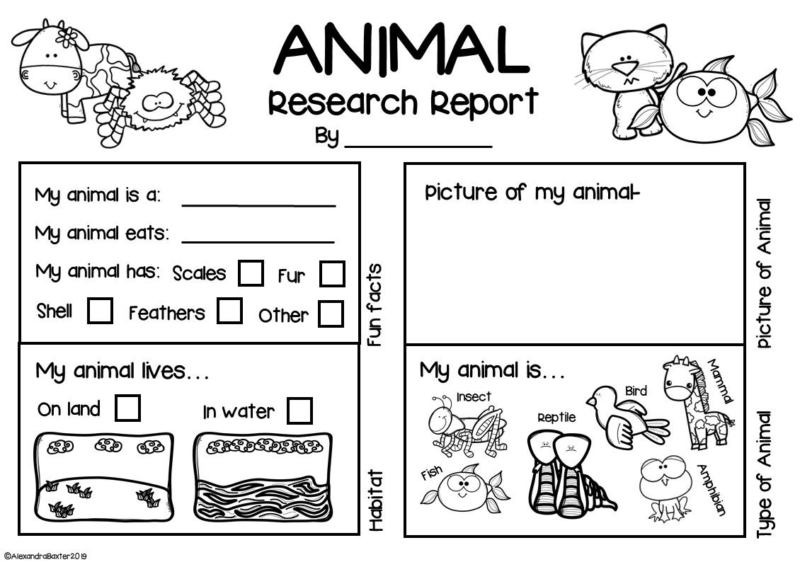 Animal Research Report Worksheets Amp Graphic Organizers