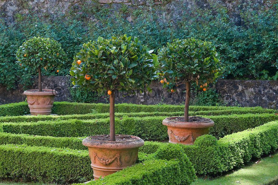villa massei gardens  lucca