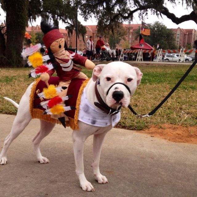 Renegade Go Noles Oh I Def Need This For Misty I Was Just