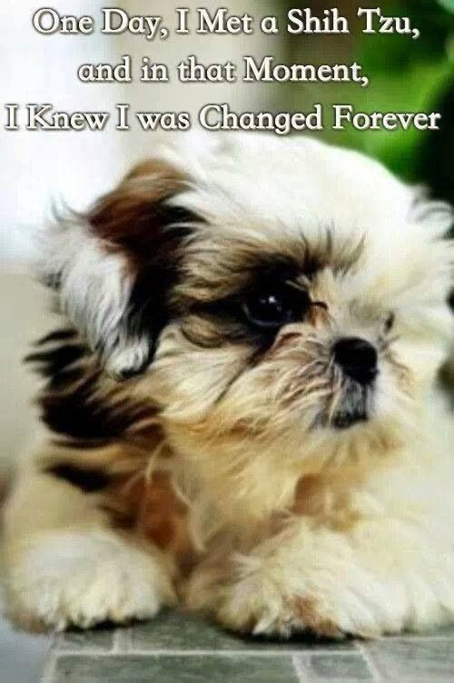 List Of The Oldest Dog Breed In The World Complete I Will Always