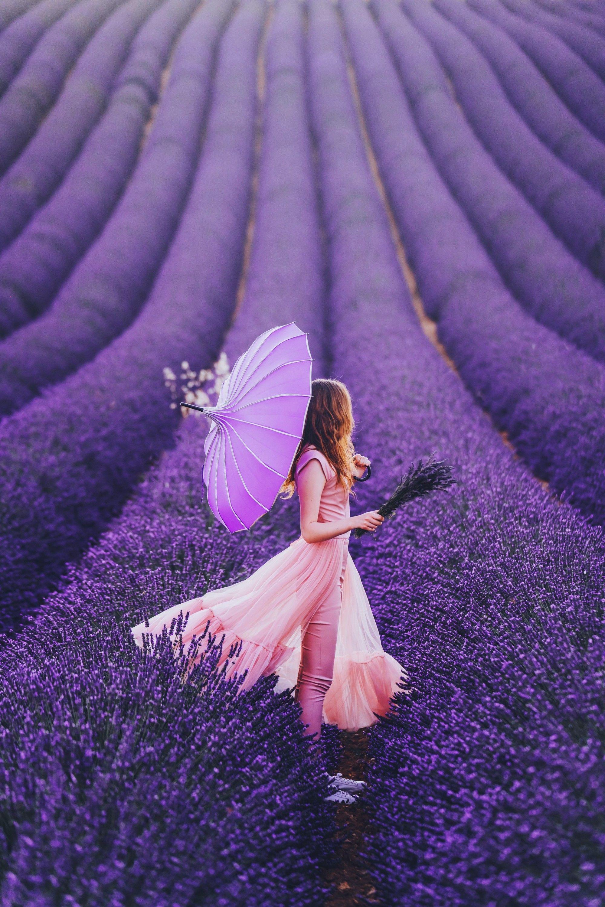 Lavanda Photo Lavender Fields Photography Lavender Fields Lovely Lavender