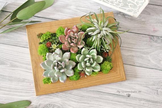 Succulent decor Succulent garden succulent frame succulent | Etsy