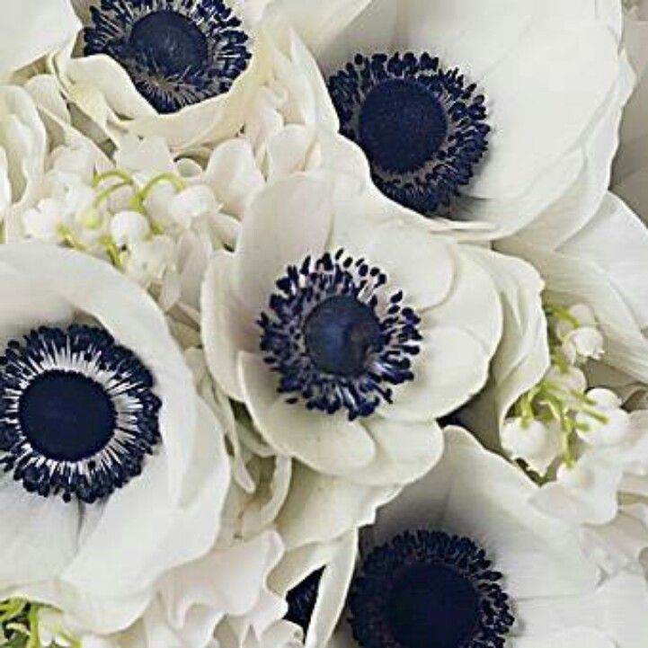 White Anemones With A Dark Blue Center Beautiful Flowers Wedding Flowers Anemone Wedding