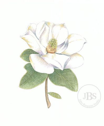 Southern Magnolia Magnolia Tattoo Leprechaun Tattoos Time Tattoos