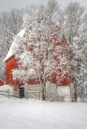 Red Barn in Winter -- Steven Shor by roxie