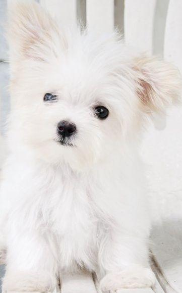 Fresh Farmhouse Cani Carini Cucciolo Piu Simpatico Cuccioli Di