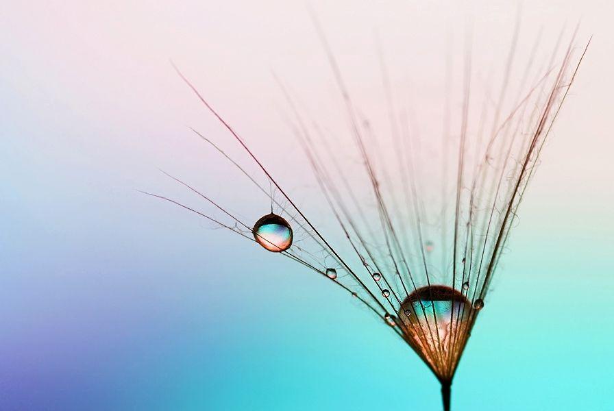 The encounter of pearls by Marcsi Kesjarne on 500px