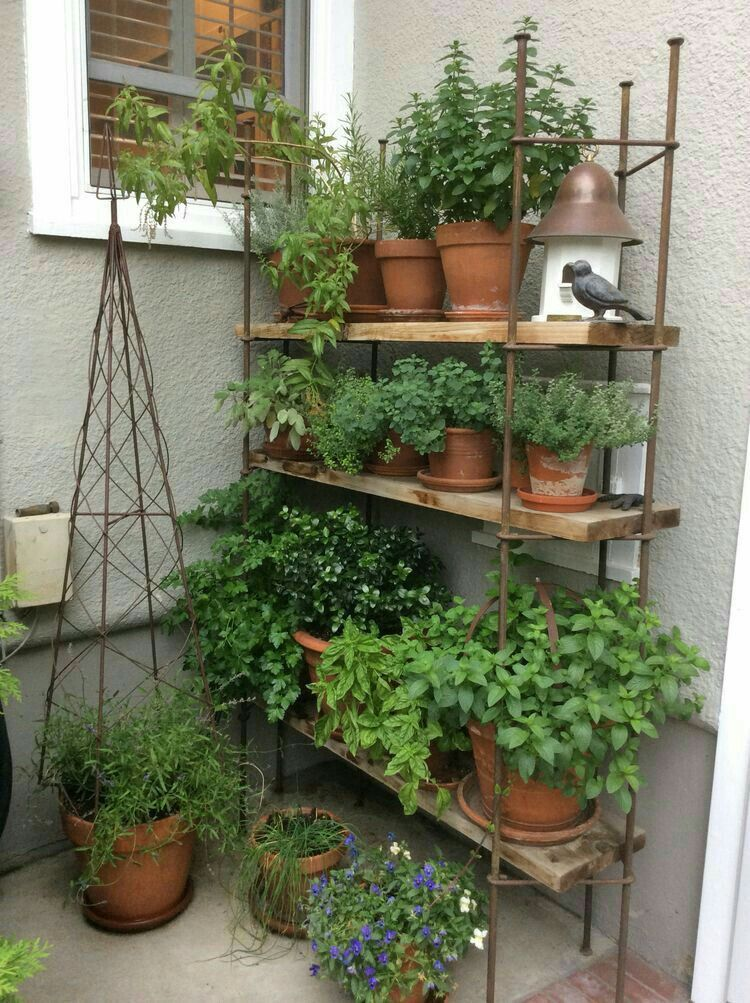 Herbs Love The Shelf Herbgardenindoorrack