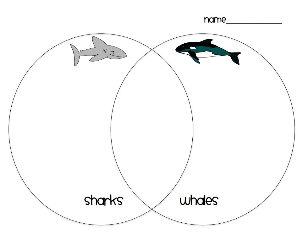shark whale venn diagram pdf