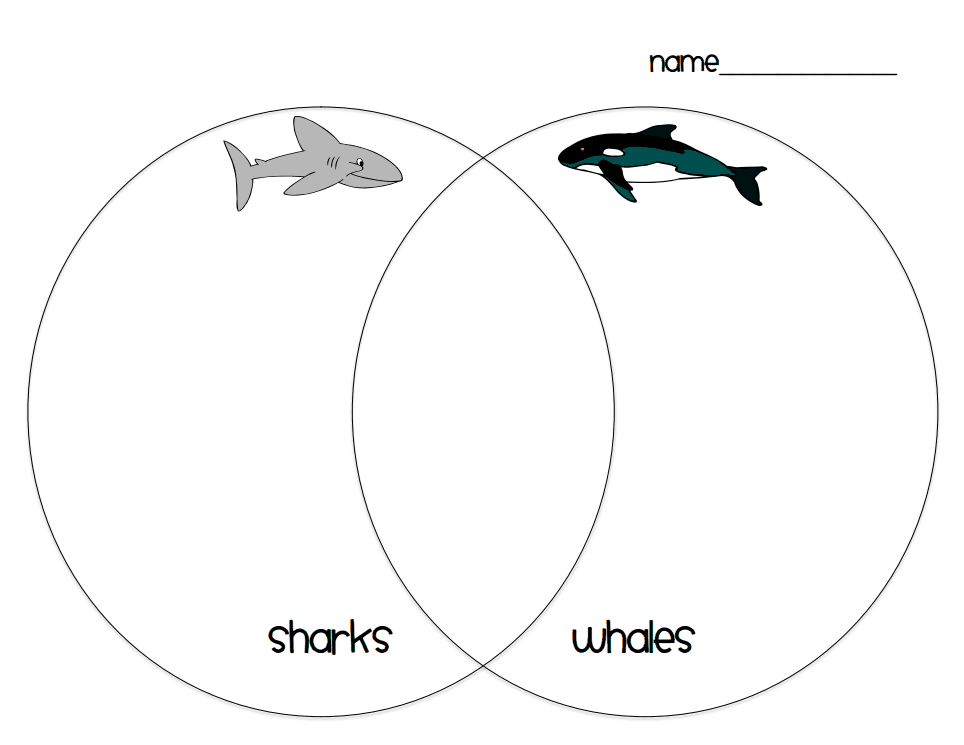 Shark whale venn diagrampdf worksheet pinterest shark whale venn diagrampdf ccuart Image collections