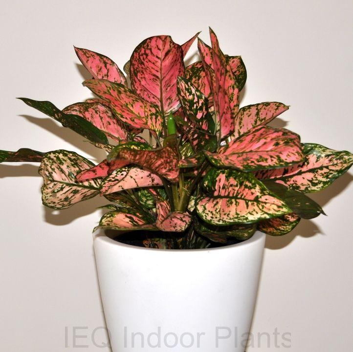 Best Indoor Plants Indoor Plants Best Indoor Plants Plants 400 x 300