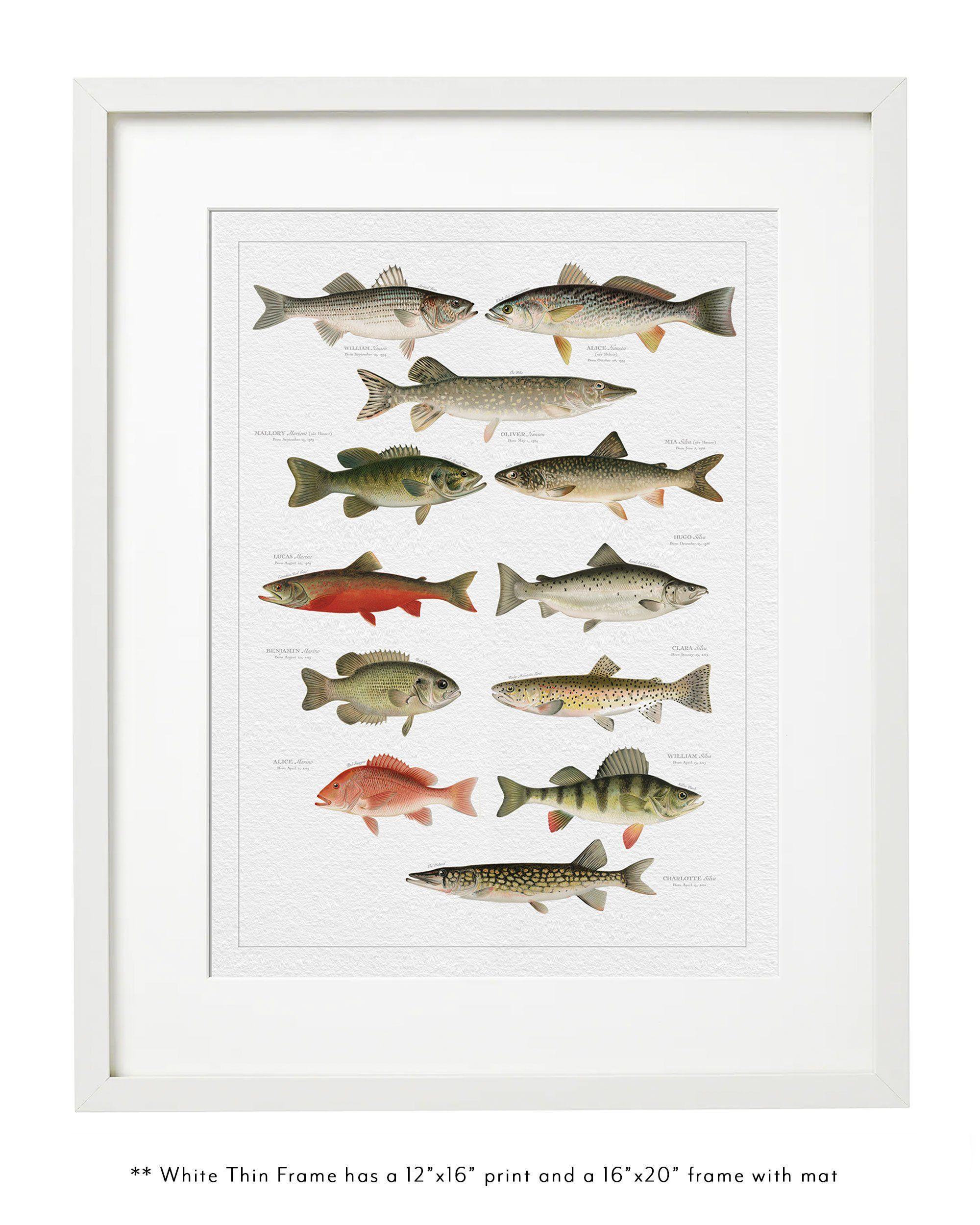 NORTH AMERICAN FISH FAMILY BOTANIC 12 x 16 Thin White