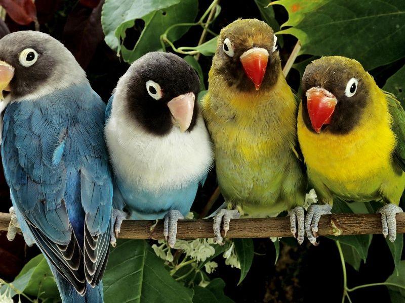 Parrot Crew