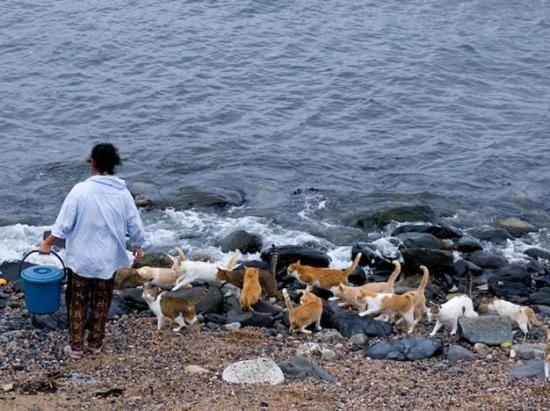 Os Biosbardos - Fotógrafo registra a realidade de Fukuoka, uma ilha dominada por gatos