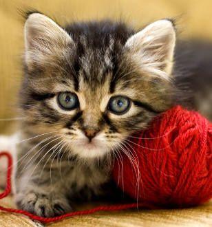 Sie wollen Ihre Katze an diesem Casting teilnehmen lassen? So funktioniert´s.Mitmachen und tolle Preise gewinnenDeutschland liebt Katzen.