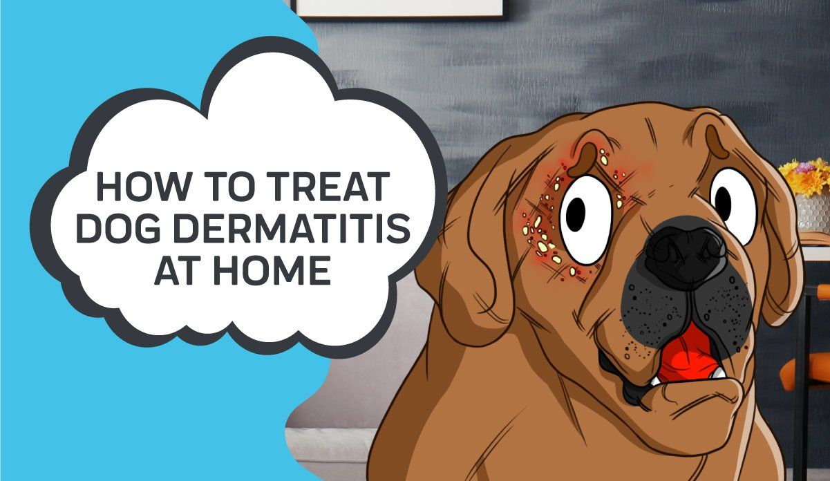 How To Treat Dog Dermatitis At Home Dermatitis Dogs Pets